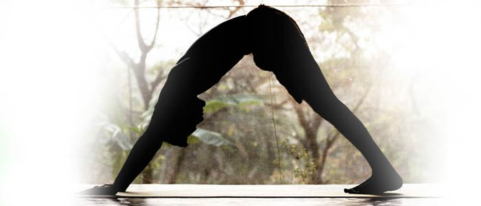 satyananda yoga bihar school of yoga in goa, yoga retreat goa, yoga retreats in goa, yoga retreats in north goa, best yoga retreat in goa, cheapest yoga retreat in goa, affordable yoga retreat in goa, yoga asana in goa, yoga meditation in goa, yoga in goa