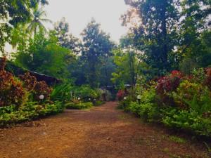 SWAN Yoga Retreat Campus