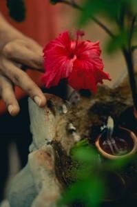 the-grace-swan-blog-yoga-ashram-goa-india